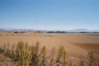 Uitgestrekte graanvelden zinderend onder de ochtendzon