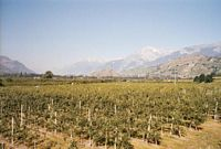 Het vruchtbare Rhônedal.