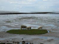 Een prive (w)eilandje met sappig gras.